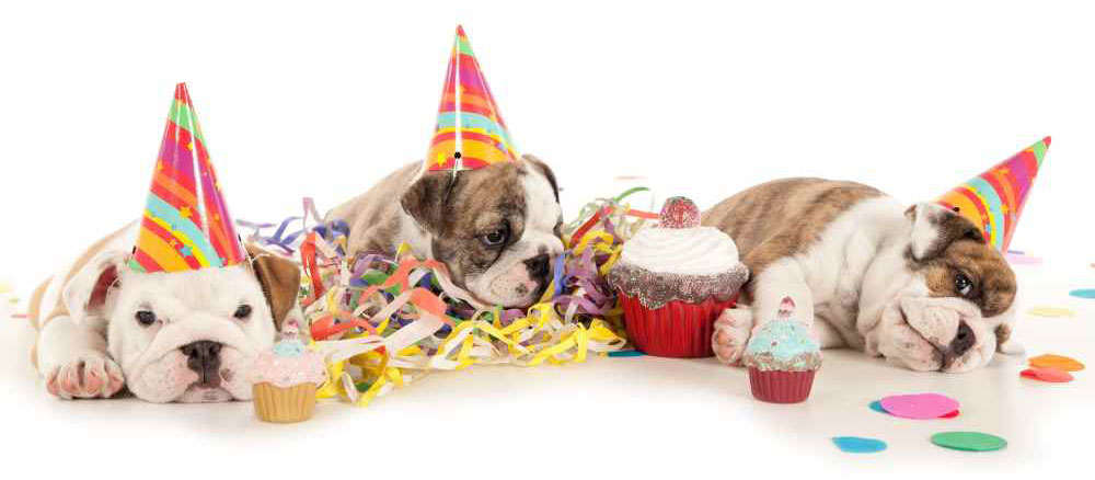 How to Plan a Dogs Birthday Party