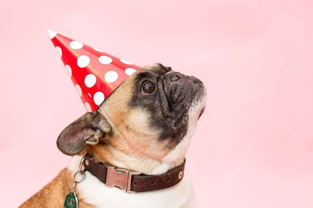 How to Plan a Pets Birthday Party