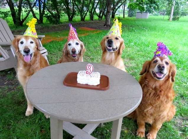 How to Plan a Puppies Happy Birthday Party