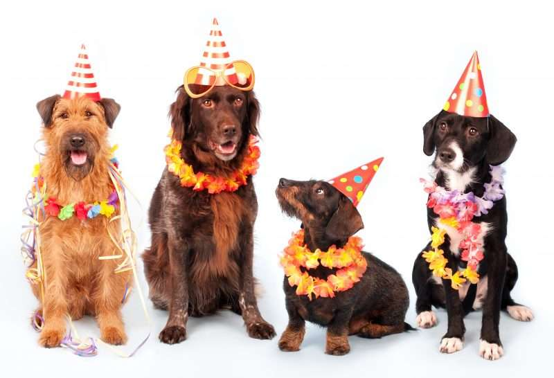 Plan a Puppies Happy Birthday Party